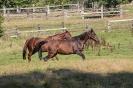 Hund und Pferde
